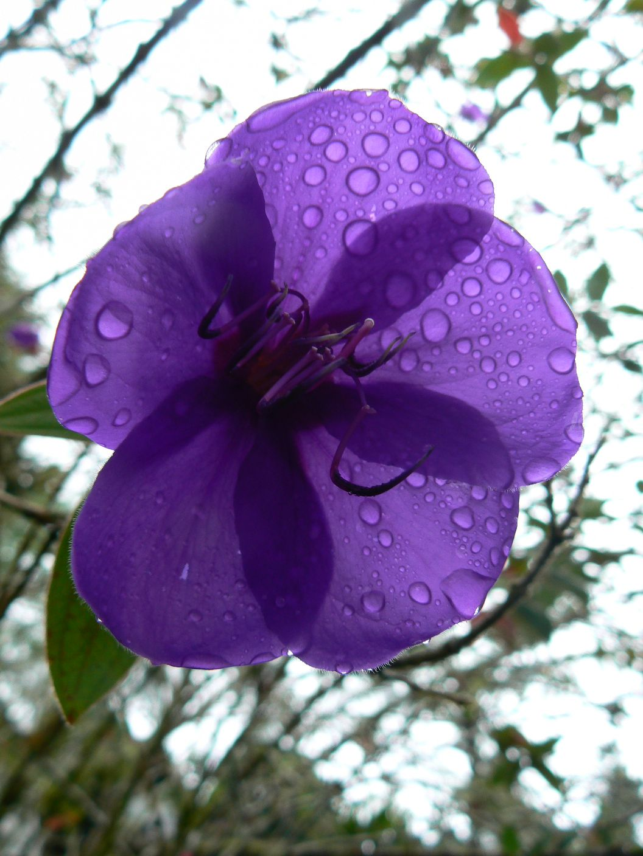 mal-139-ch-flowers-5