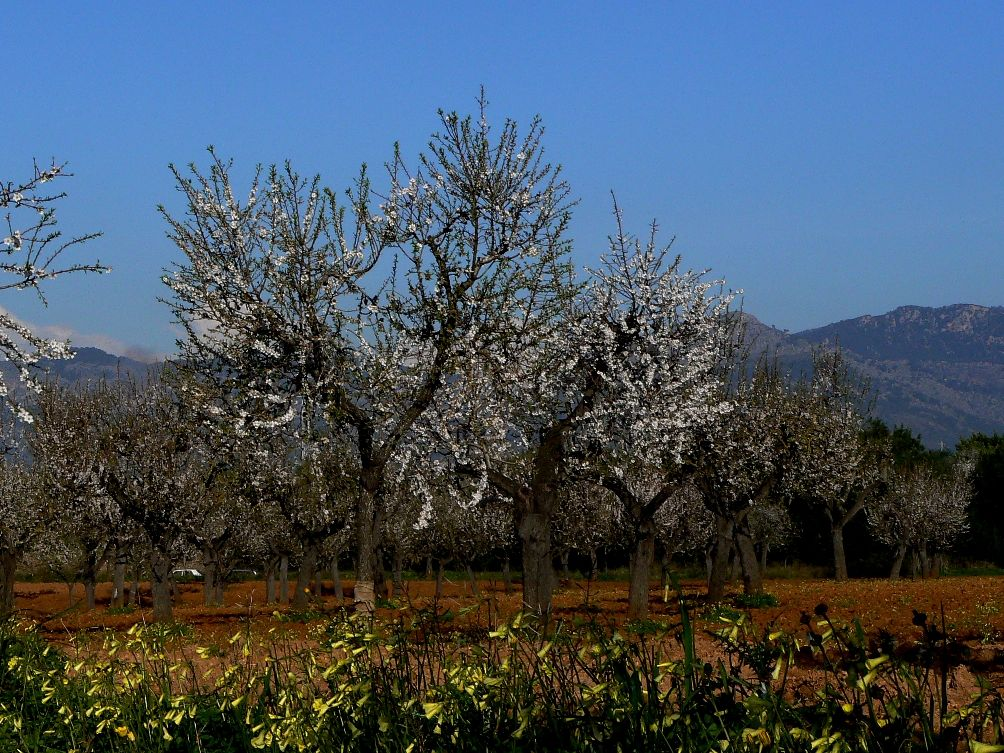 mallorca-feb-2009-192b