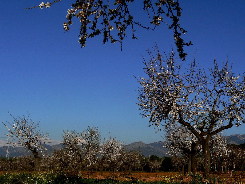 mallorca-feb-2009-200