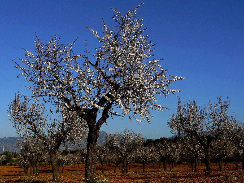 mallorca-feb-2009-209