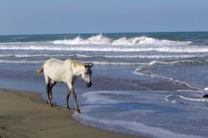 Am Strand von Costa Rica